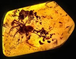 insetti catturati dall'ambra